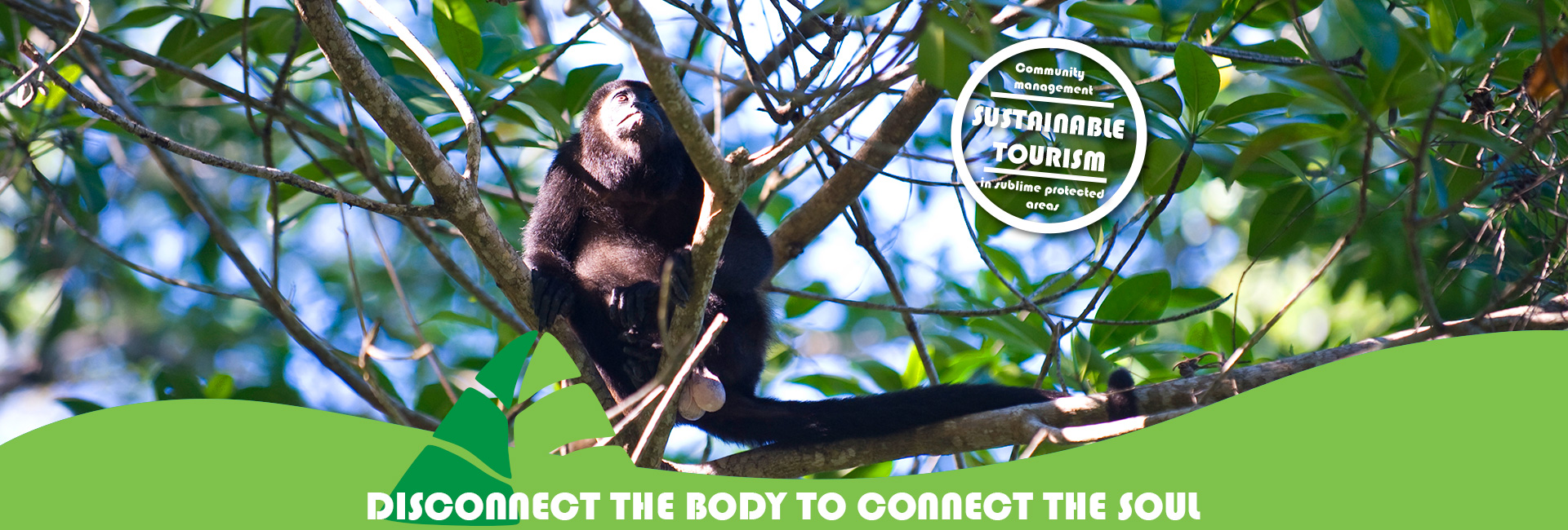 Disconnect the body in Caribe Maya